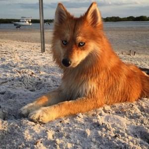 Mya Sand