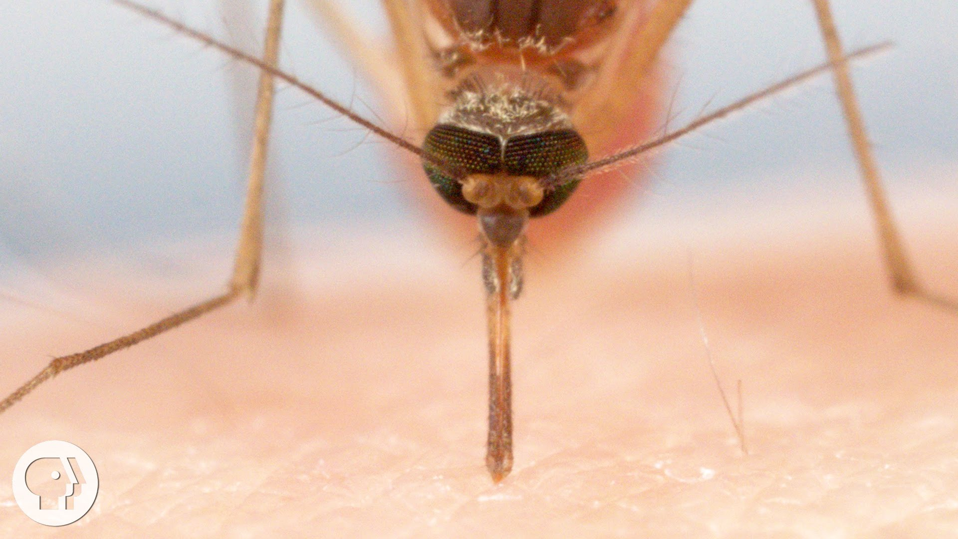 The Terrifying Anatomy of a Mosquito Bite