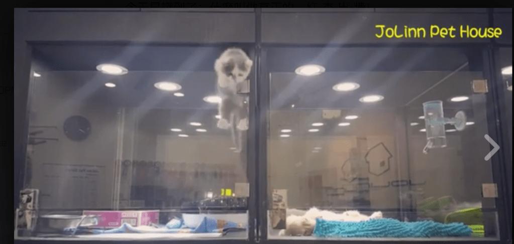 Escaping Kitten