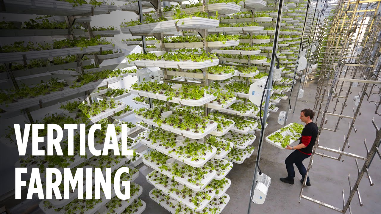 How Vertical Farming Works To Maximize Crop Output While