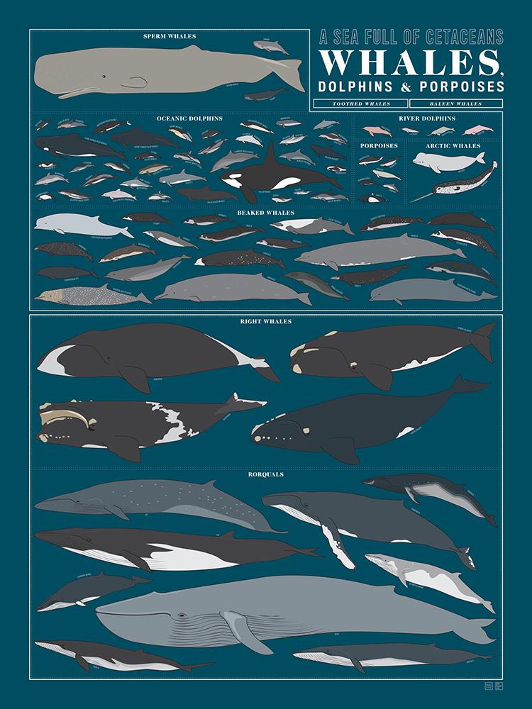 A SEA FULL OF CETACEANS