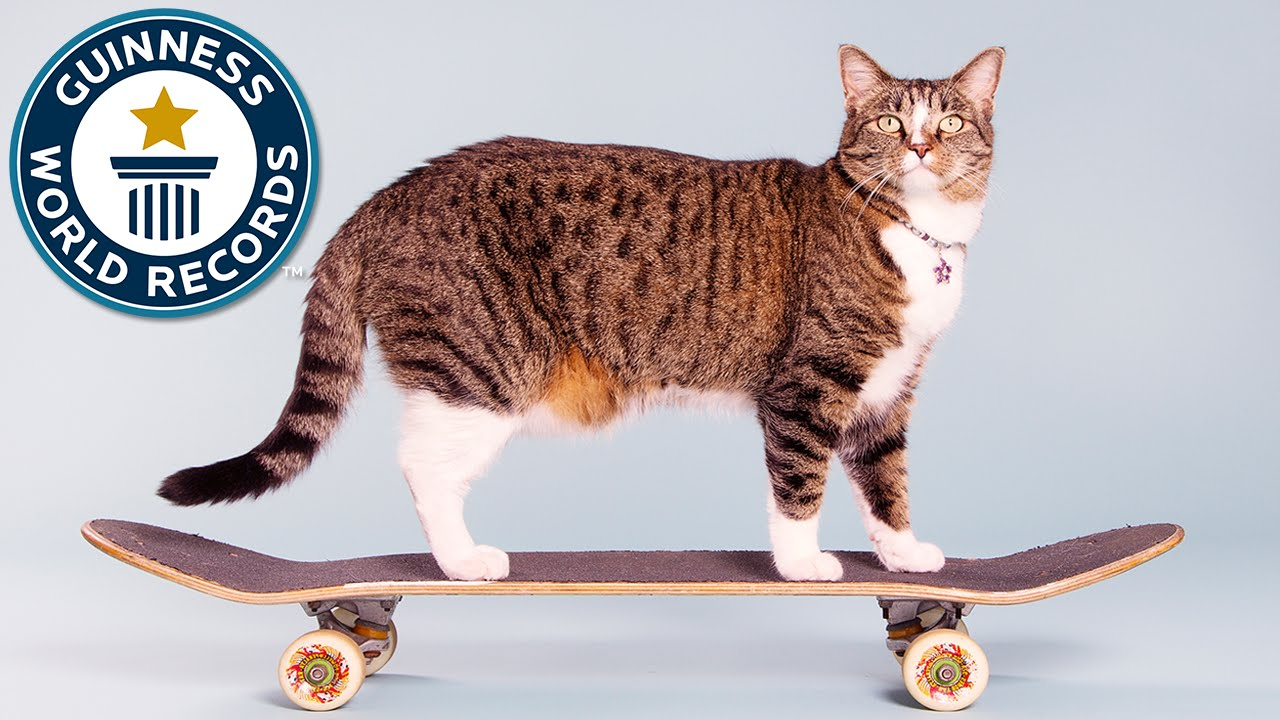 didga the skateboarding cat sets the world record for most tricks by a cat in one minute - Smallest Cat In The World Guinness 2017