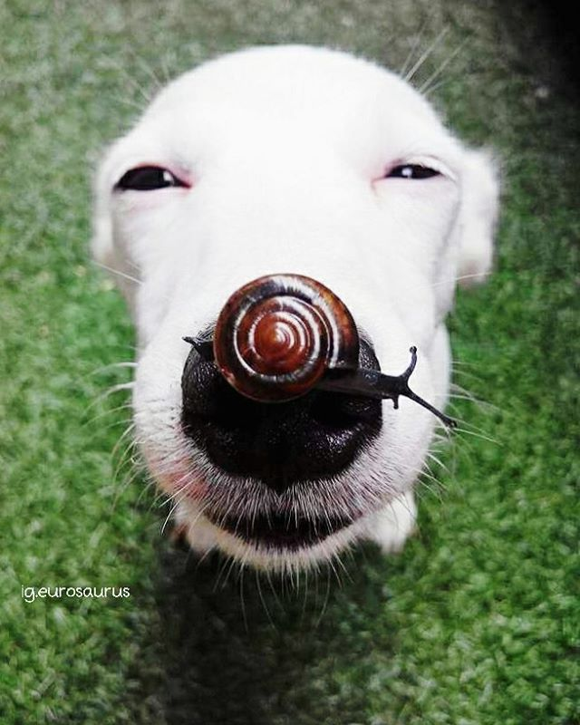 A Smiling Dog Patiently Allows A Brown Snail To Cross