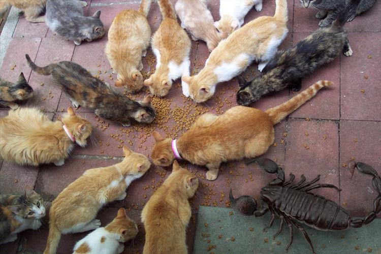 Cats and Giant Scorpion