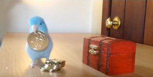 Charlie the Parrotlet Coins
