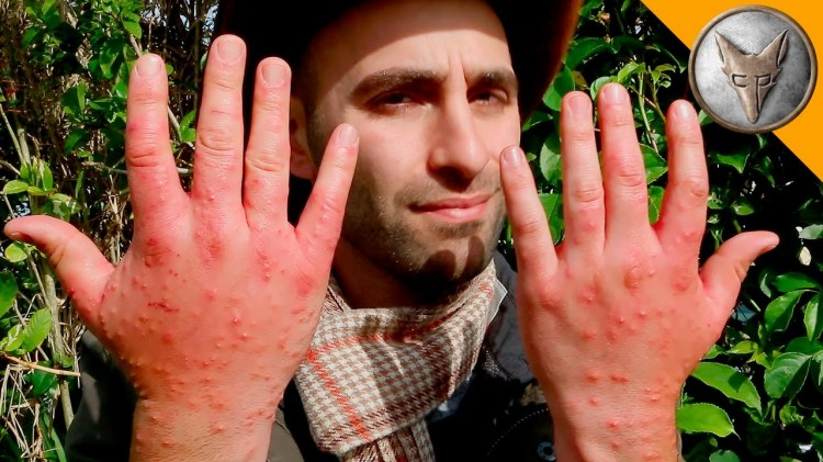 A Compilation of the Most Painful Insect Stings That Wilderness Expert Coyote Peterson Has Endured