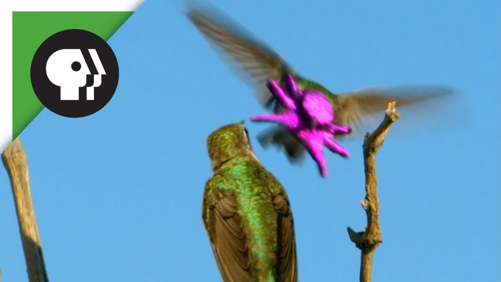 A Hopeful Male Hummingbird Transforms His Face Into a Brightly Colored Baby Octopus Mask