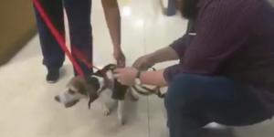 Beagle TIE Fighter