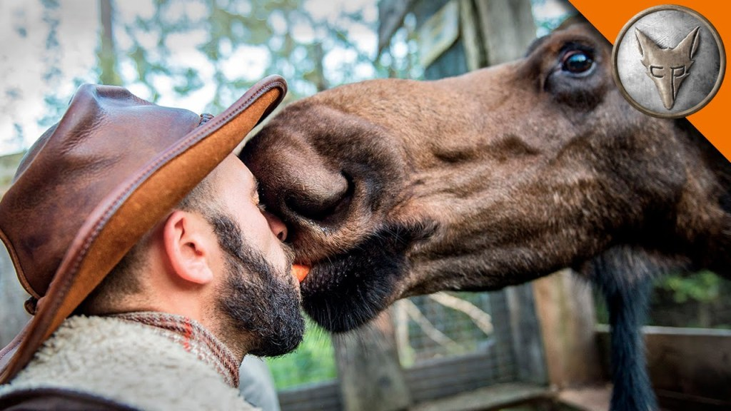 Coyote Peterson Kisses a Moose and Catches an Elusive Toad While On Location in Alaska
