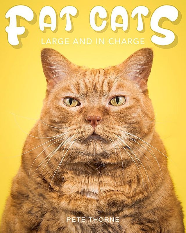 Fat Cats: Large and In Charge, A Sweet Portrait Book That Captures the Lovability of Portly Felines