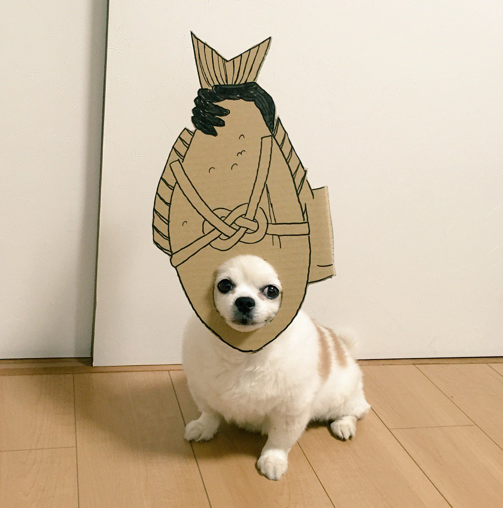 fish & Japanese Woman Creates Amusing Cardboard Costumes for Her Beloved ...