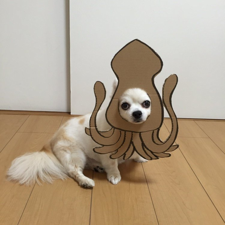 Japanese Woman Creates Amusing Cardboard Costumes for Her Beloved Chihuahua