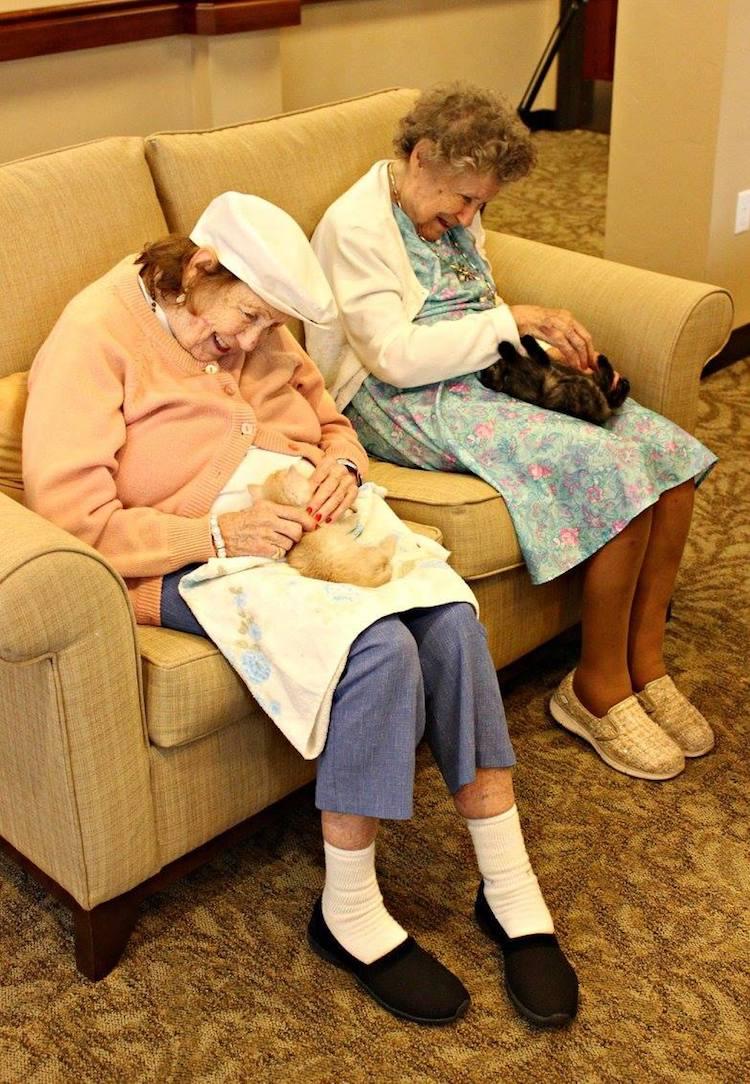 Kittens Seniors
