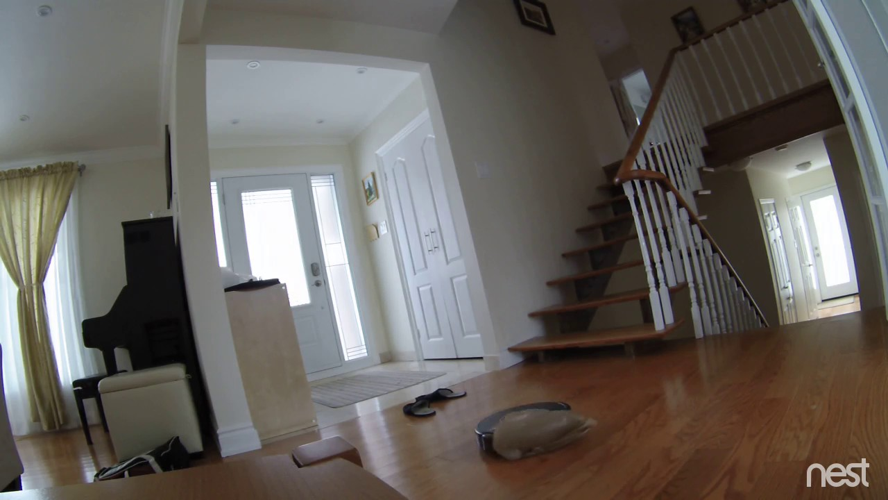 A Self Destructive Roomba Caught In A Plastic Bag Throws Itself Off The  Stairs To An Untimely Death