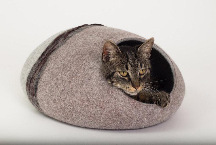brown-cat