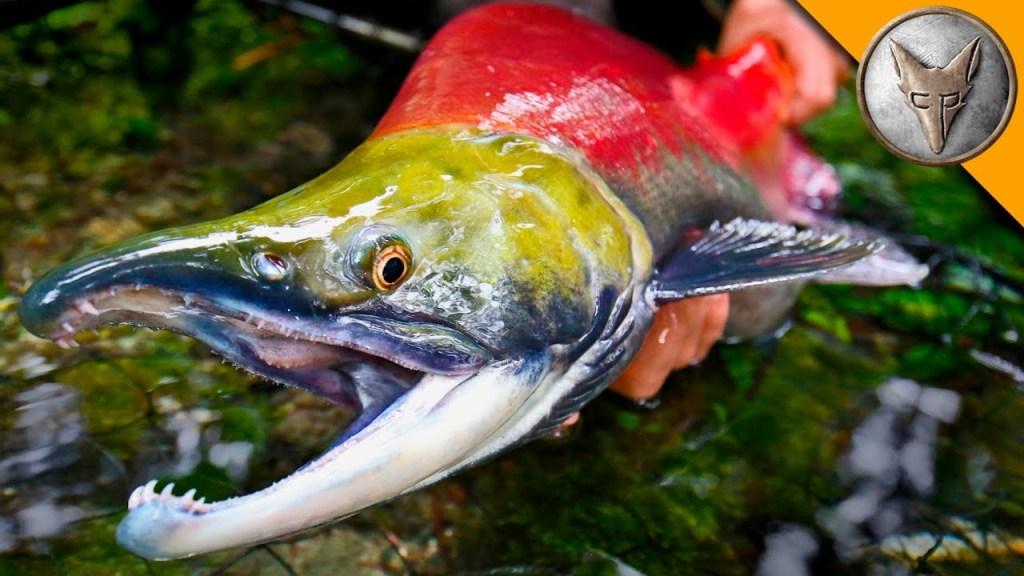 Coyote Peterson Nets and Releases a Giant Sockeye Salmon In Alaskan Bear Country
