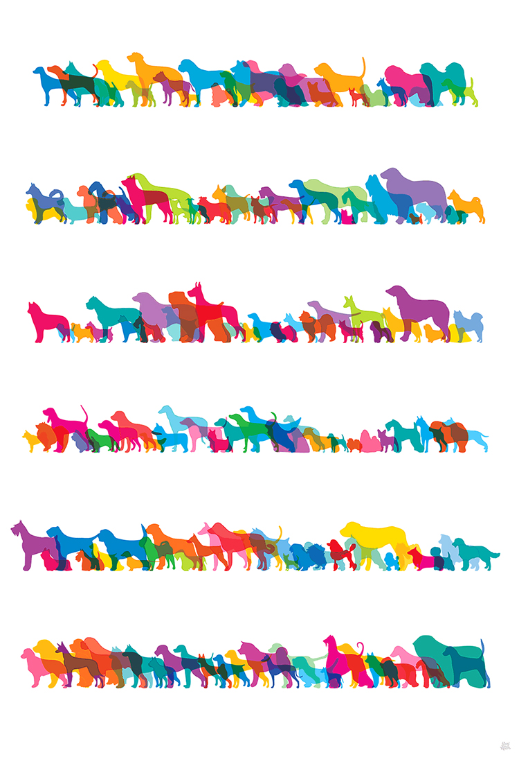 Shapes of Dogs
