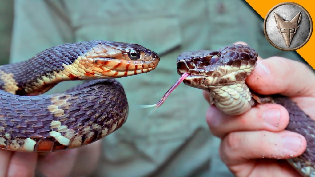 How To Tell The Difference Between A Venomous Water