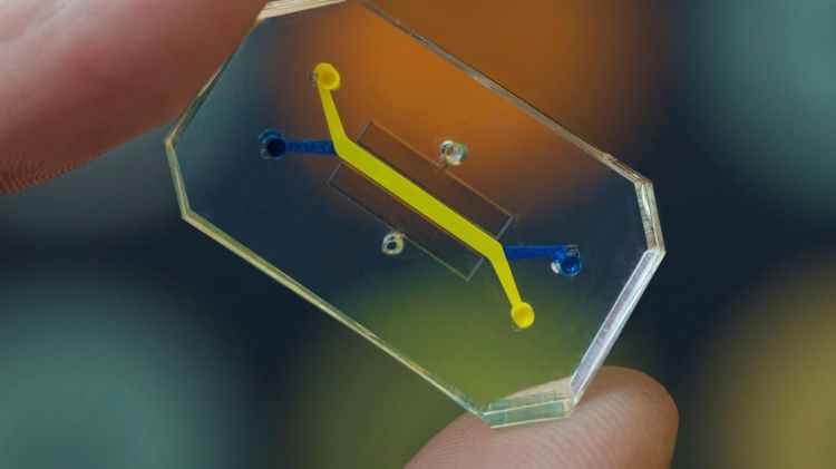 Organ-on-Chip