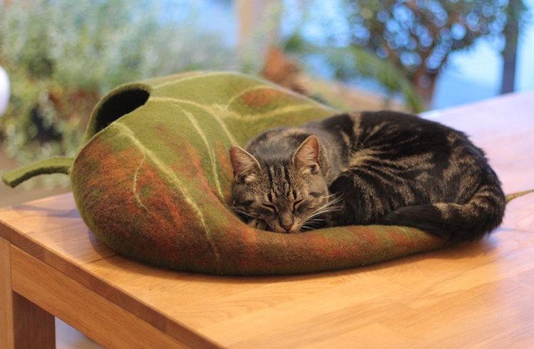 outside-nap