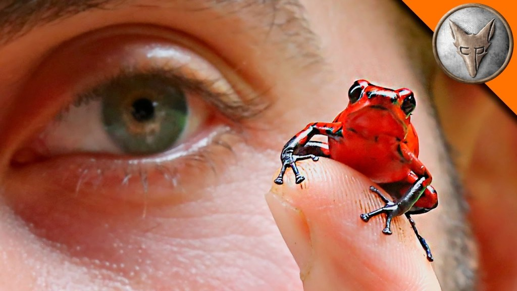 Coyote Peterson Finds a Beautiful Strawberry Poison-Dart Frog on a Return Trip to Costa Rica