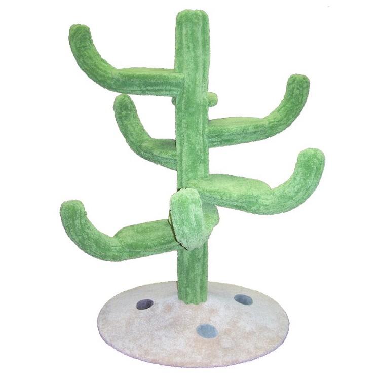 Cozy Cactus