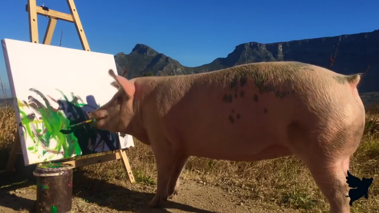 Pigcasso, A Creative Pig Who Was Saved From Slaughter Expresses Herself Through Painting