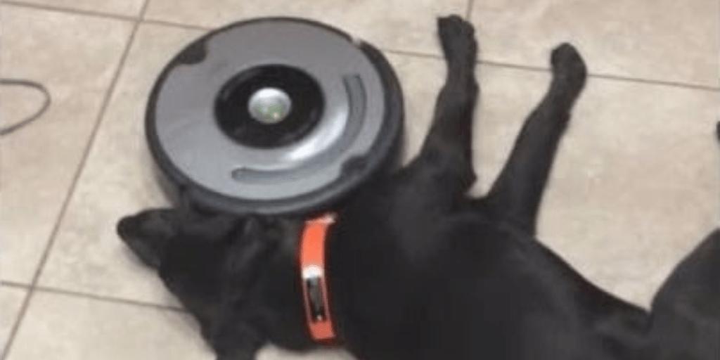 Roomba dog