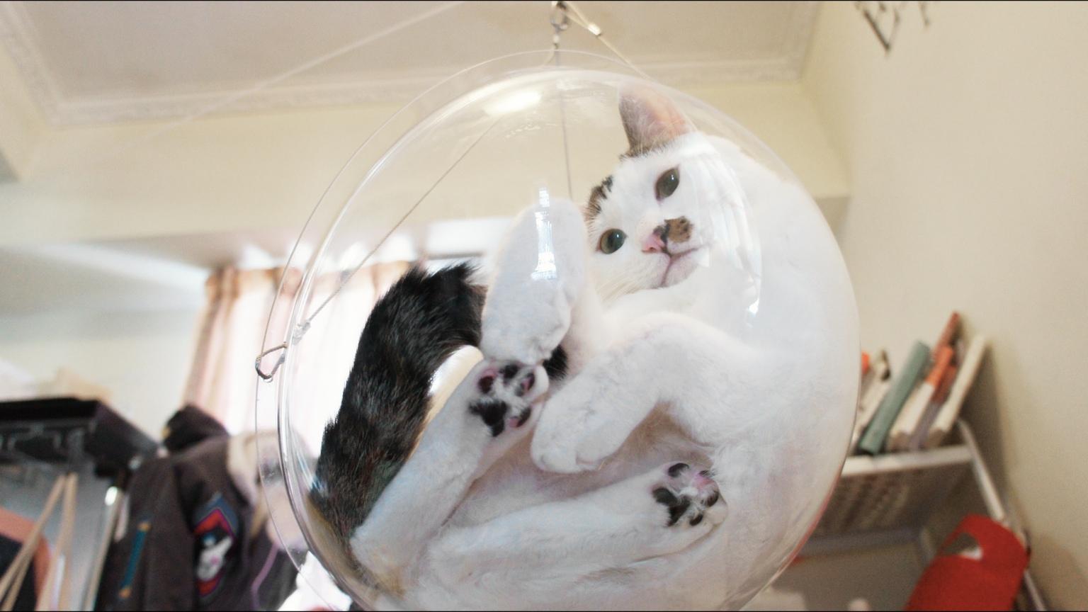 Astonishing The Dim Dim Bubble Bowl A Hanging Transparent Cat Bed That Customarchery Wood Chair Design Ideas Customarcherynet