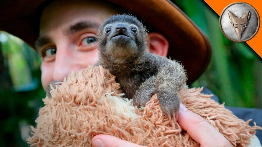 Coyote Peterson Hangs Out With a Teeny Tiny Baby Sloth Who Was Rescued From the Rainforest Floor
