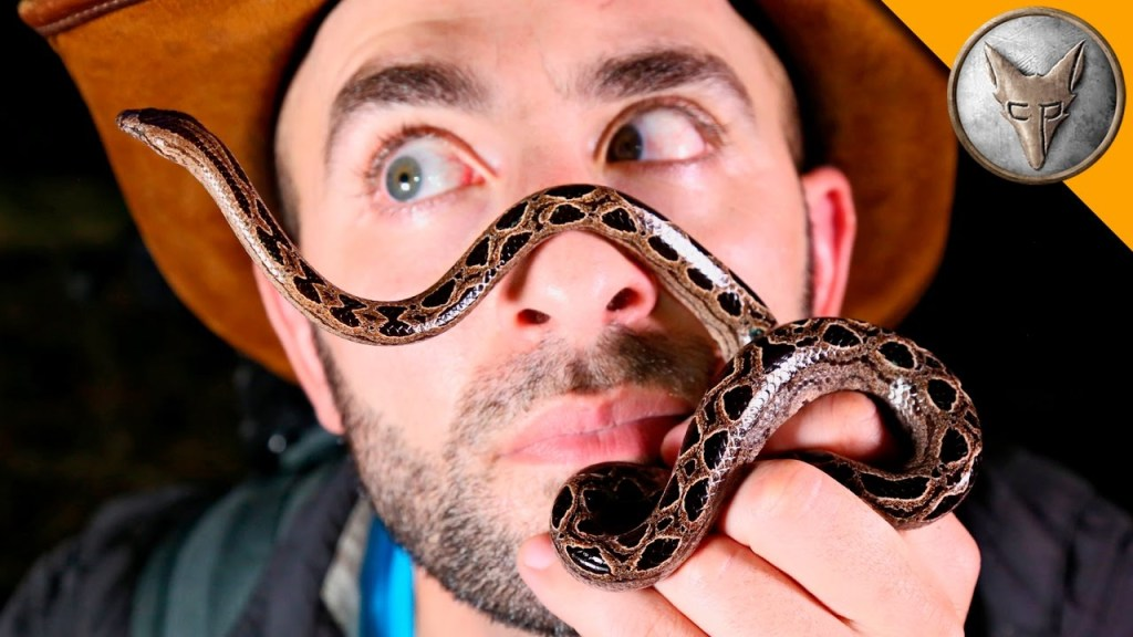 Coyote Peterson Has an Up Close Meeting With a Curious Dwarf Banana Boa Who Likes His Hat