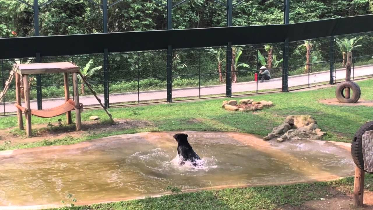 euphoric bear gleefully splashes around in his sanctuary pool