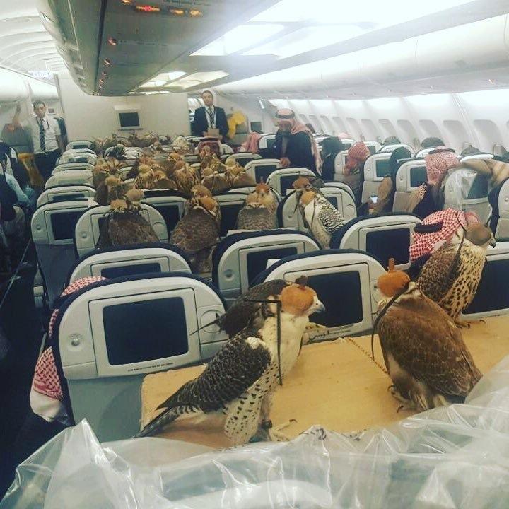 Hawks on a Plane