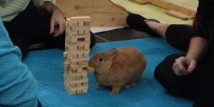 Jenga Bunny