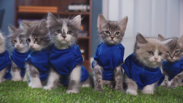 Adorable Kittens Play a Heated Game of Football Against Cute Puppies in 'Puppy Bowl'