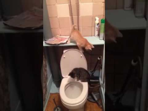 A Fleeing Little Orange Kitten Accidentally Knocks a Little Black Kitten Into an Open Toilet