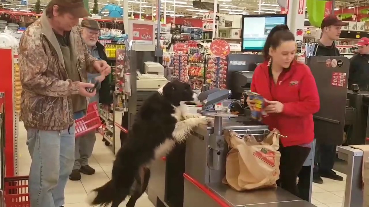 A Very Clever Dog Visits a Pet Store to Choose, Pay For and Carry Out His Own Treats Out to the Car