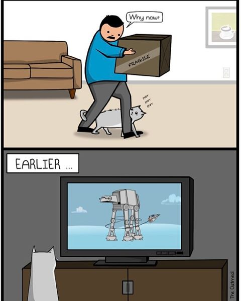When Cats Get Inspired by The Empire Strikes Back