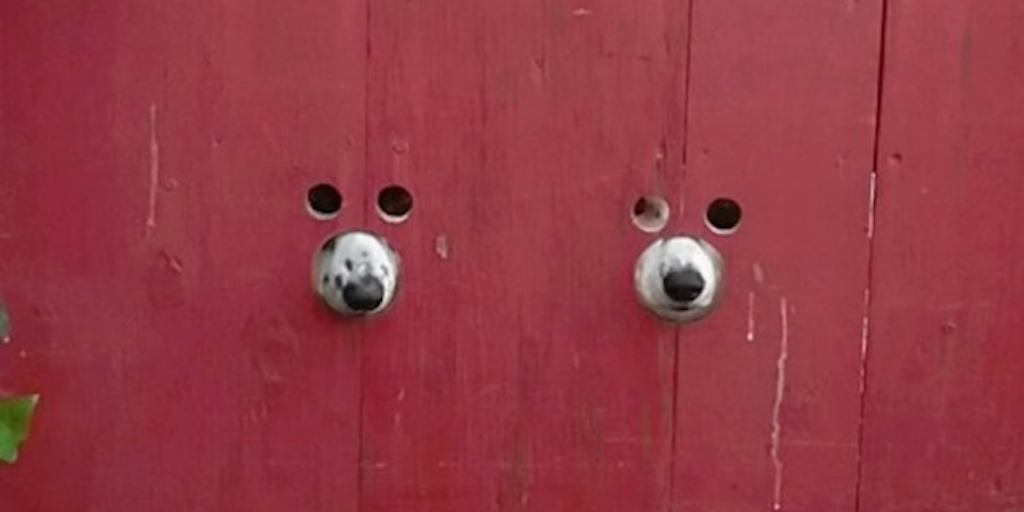 Two Curious Dogs Peek Outside Through A Clever Red Gate