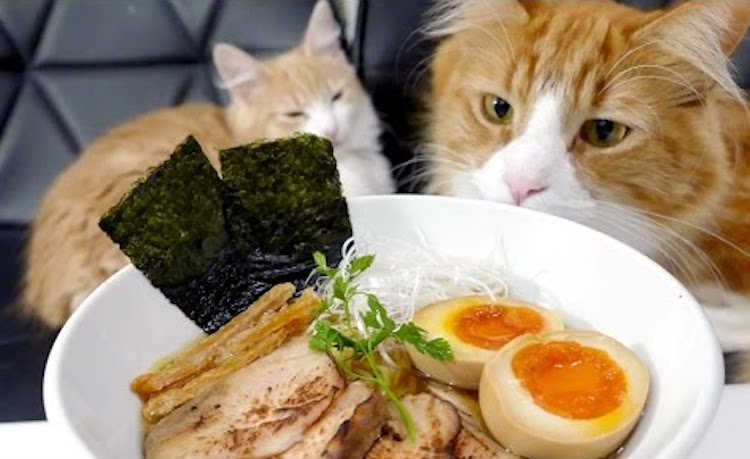 Two Lazy Orange and White Cats Watch as Their Human Prepares Homemade Ramen