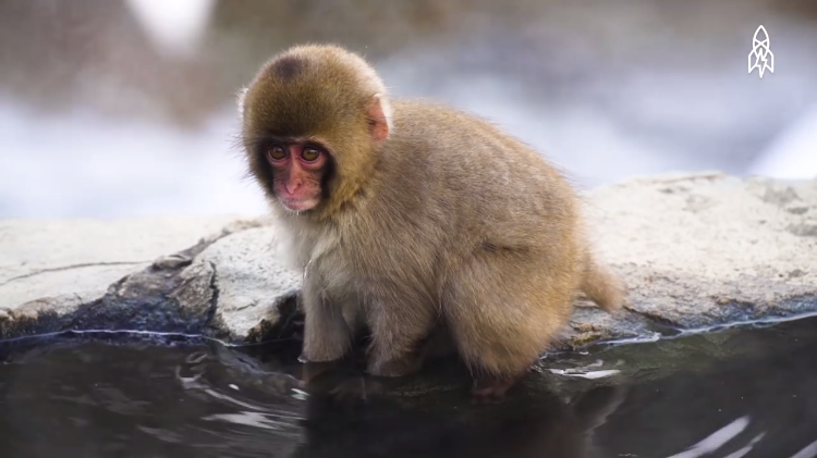 The Mountainous Japanese Hot Springs Spot That Has Become a Natural Spa for Cold Snow Monkeys