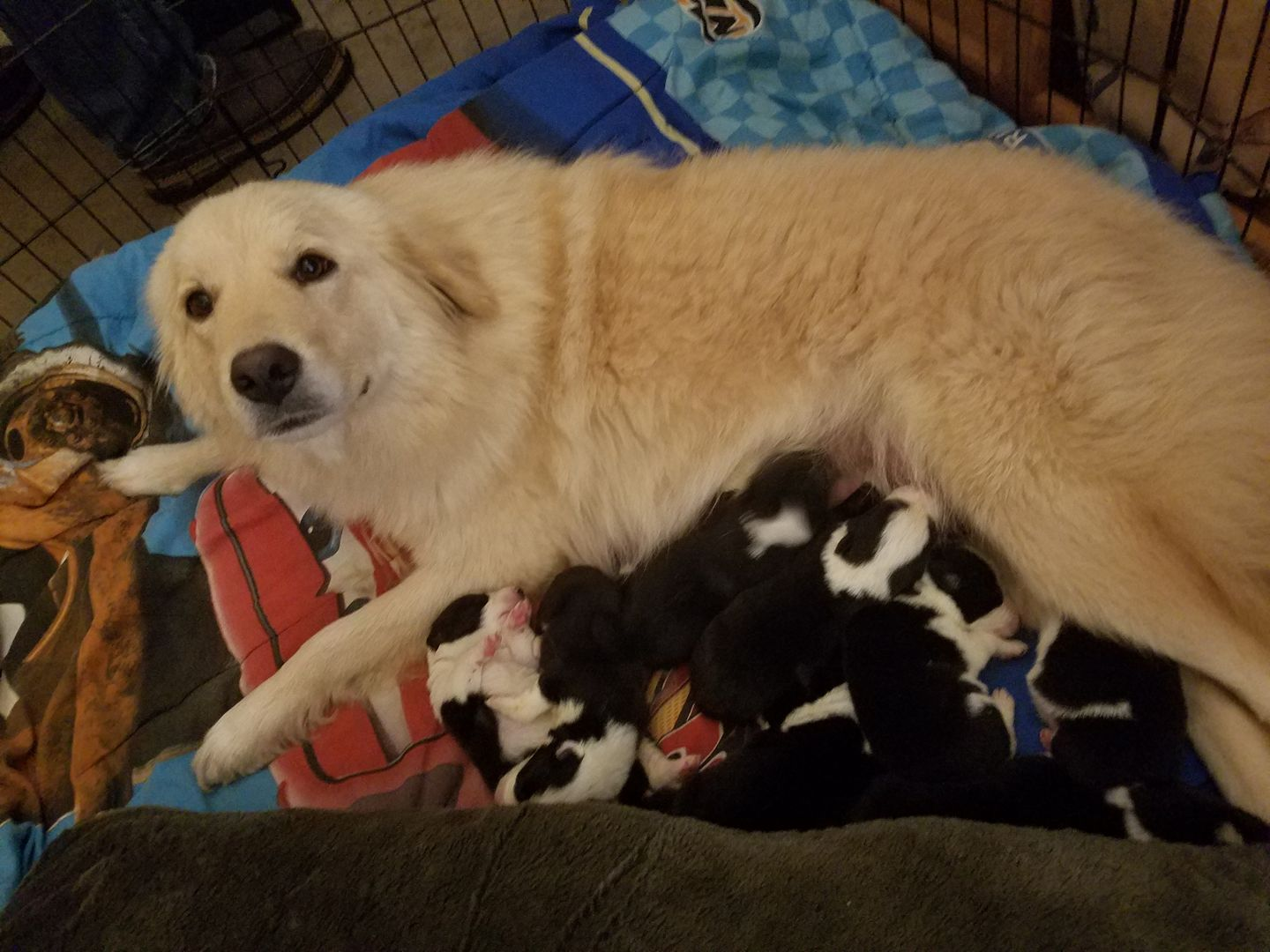 Grieving Dog Who Lost Her Puppies In Fire Finds Comfort With Orphan Pups In Need of a Mother