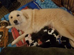 Daisy and Pups