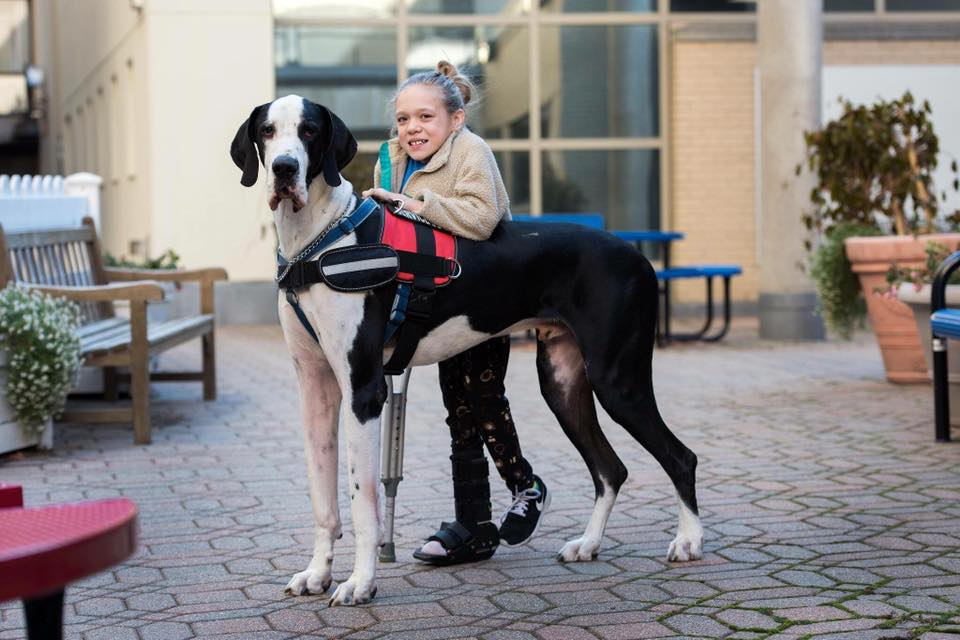 Loving Great Dane Who Helped His Human Walk Unassisted Is Treated to a Day of His Favorite Things