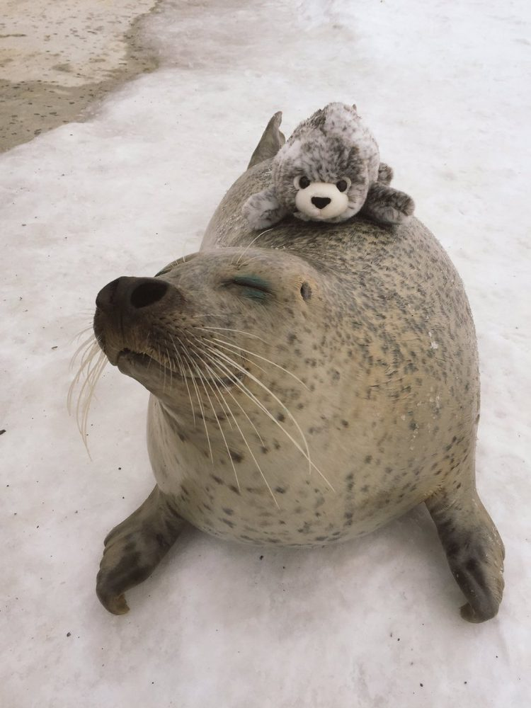 Seal Back
