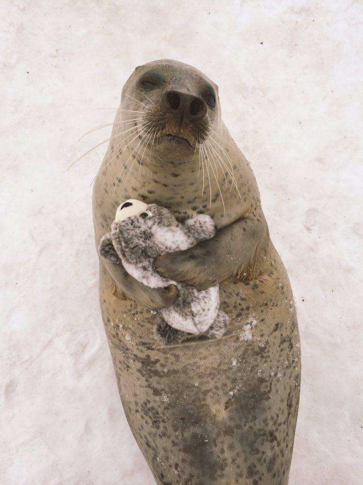 Seal Hug