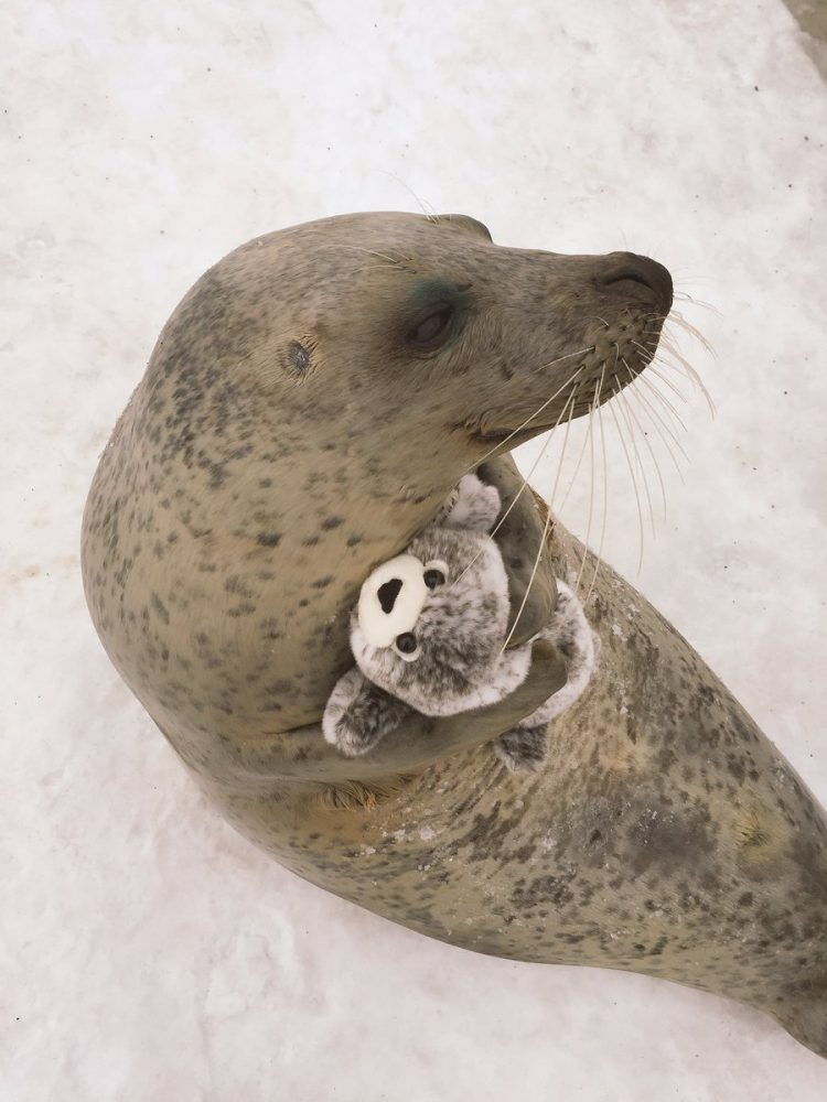 Seal Hug Side