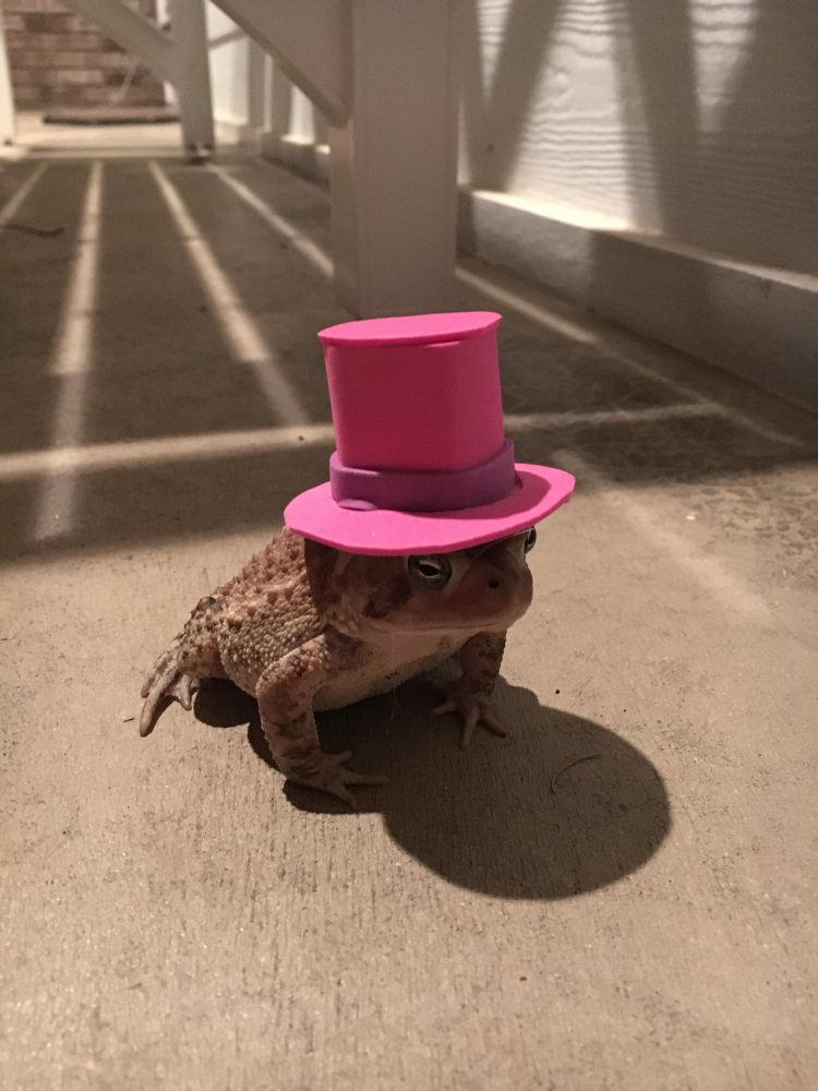Toad in Top Hat