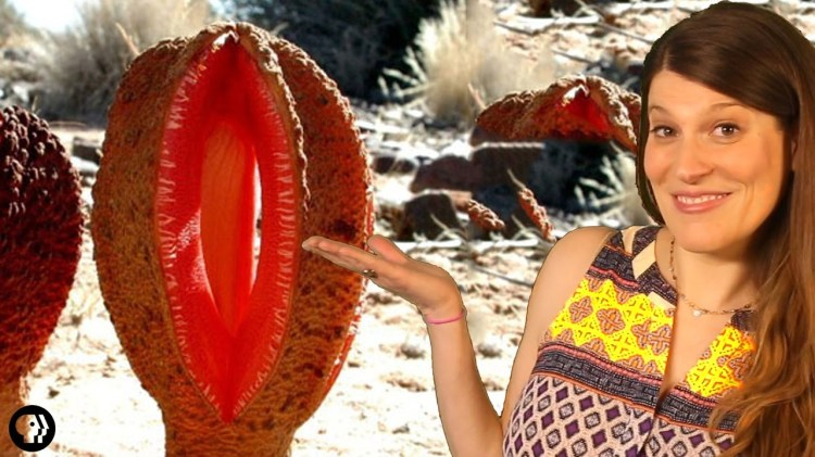 Why Hydnora Africana Is One of the Strangest and Worst Smelling Plants in the World