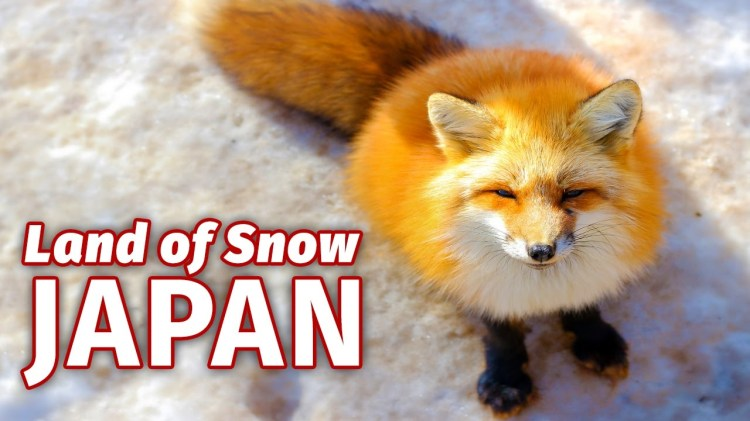 British Expatriate Finds Himself Stuck in a Blizzard After Visiting Fox Village in Northeast Japan